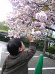4月24日上野公園.jpg